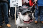 A protest dog at the London march